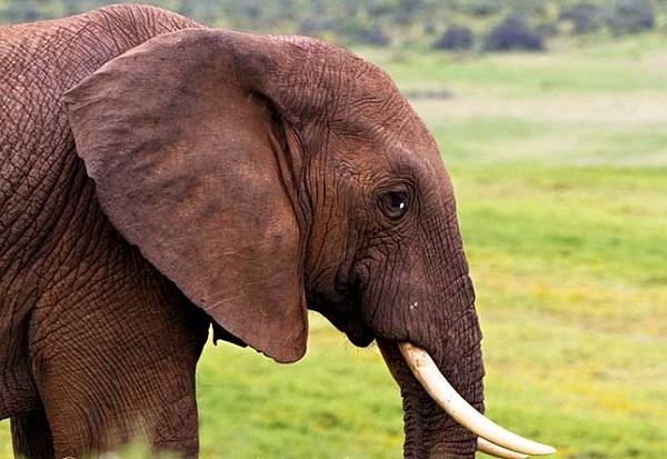 Khả năng thích nghi với môi trường đến khó tin của động vật 9