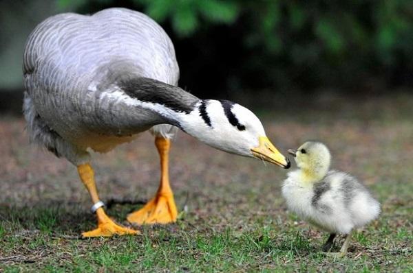 Khả năng thích nghi với môi trường đến khó tin của động vật 15