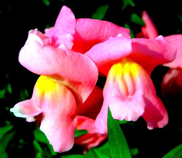 Các loài thực vật có hình dáng từ hài hước đến đáng sợ 1