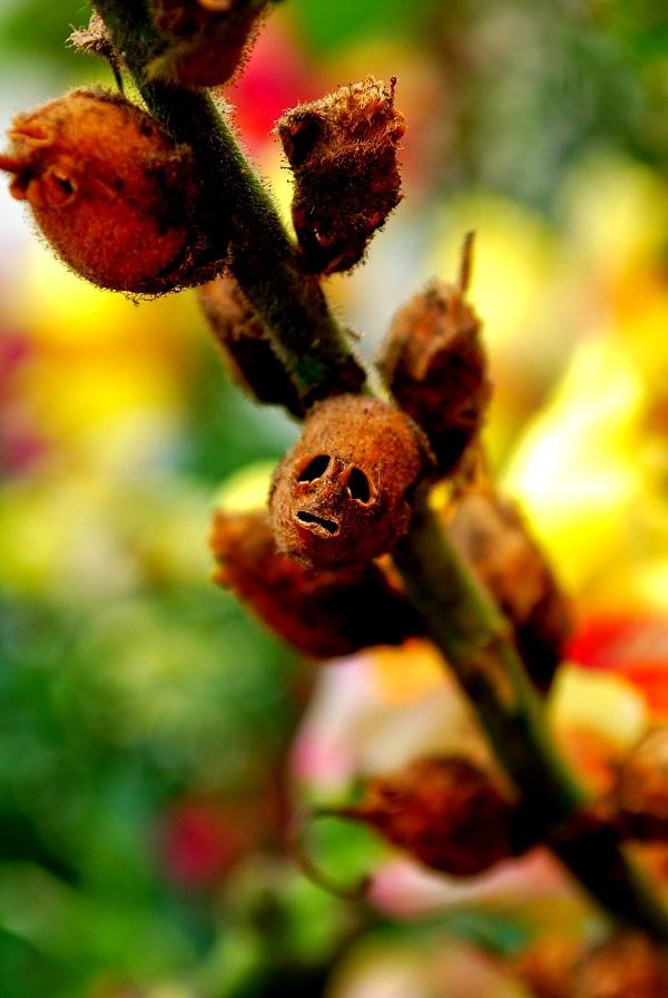 Các loài thực vật có hình dáng từ hài hước đến đáng sợ 4