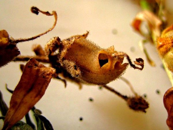 Các loài thực vật có hình dáng từ hài hước đến đáng sợ 5