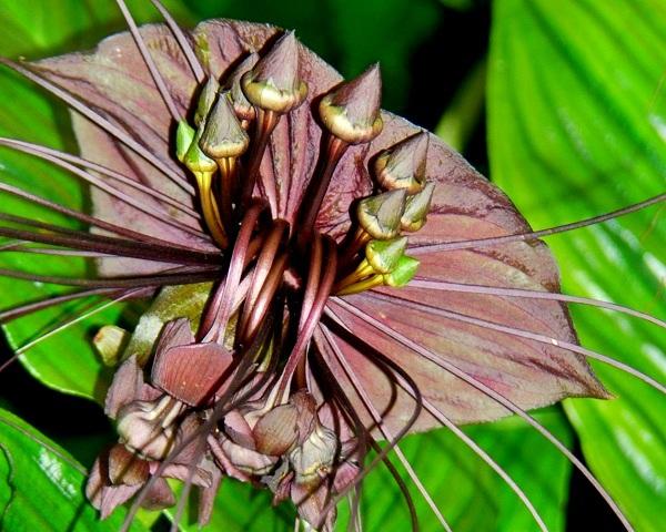 Các loài thực vật có hình dáng từ hài hước đến đáng sợ 10