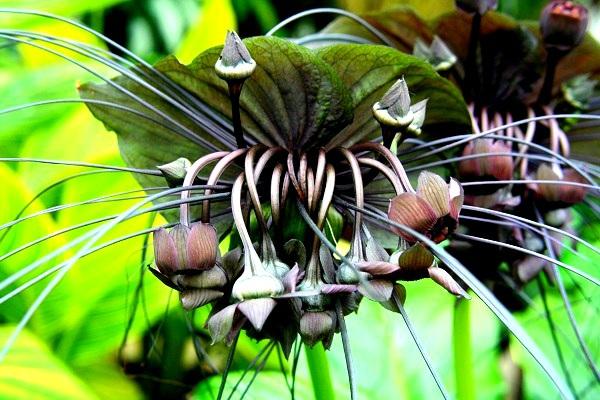 Các loài thực vật có hình dáng từ hài hước đến đáng sợ 11
