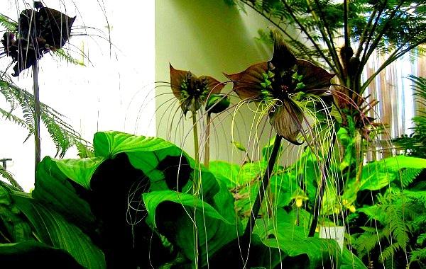 Các loài thực vật có hình dáng từ hài hước đến đáng sợ 12