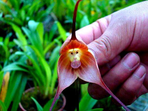 Các loài thực vật có hình dáng từ hài hước đến đáng sợ 6