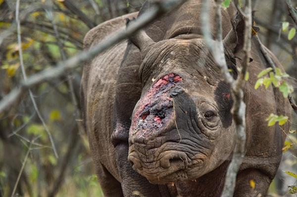 """Choáng với kiểu """"tính tiền"""" săn bắn động vật quý hiếm ở Châu Phi 1"""