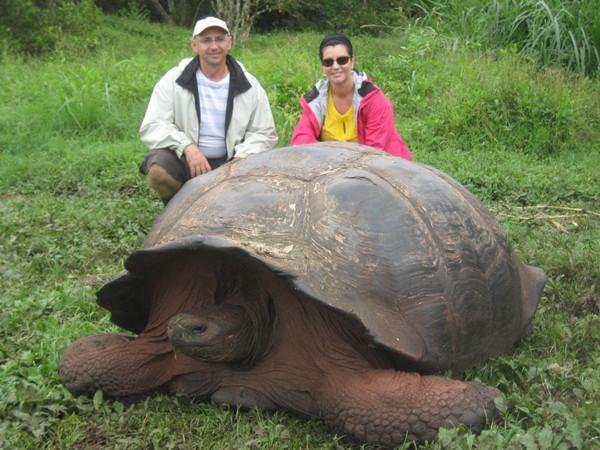 Vạch trần sự thật về rùa khổng lồ 529 tuổi, nặng 363 kg 2