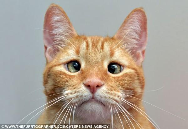 Chú mèo mắt lác bỗng trở thành ngôi sao nhờ vẻ ngoài đáng yêu 1