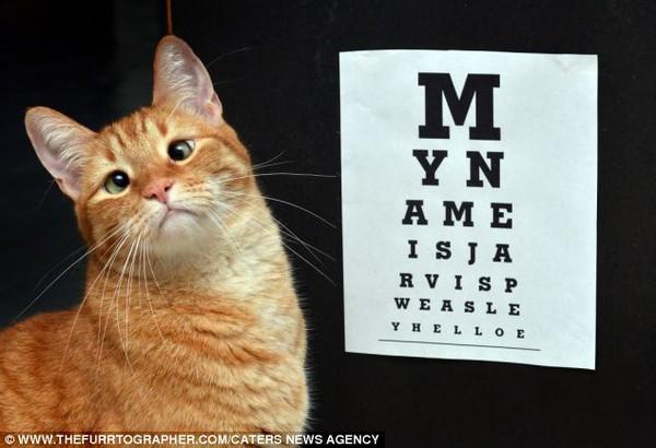 Chú mèo mắt lác bỗng trở thành ngôi sao nhờ vẻ ngoài đáng yêu 3