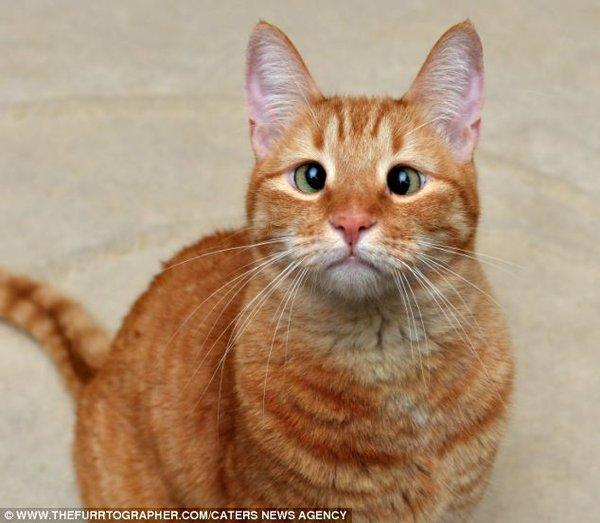 Chú mèo mắt lác bỗng trở thành ngôi sao nhờ vẻ ngoài đáng yêu 2
