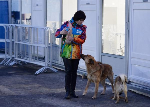 Olympic Mùa đông 2014: Hàng ngàn chú chó hoang dạo chơi tại Sochi 3