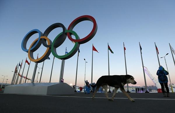 Olympic Mùa đông 2014: Hàng ngàn chú chó hoang dạo chơi tại Sochi 9