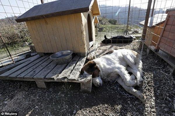 Olympic Mùa đông 2014: Hàng ngàn chú chó hoang dạo chơi tại Sochi 13