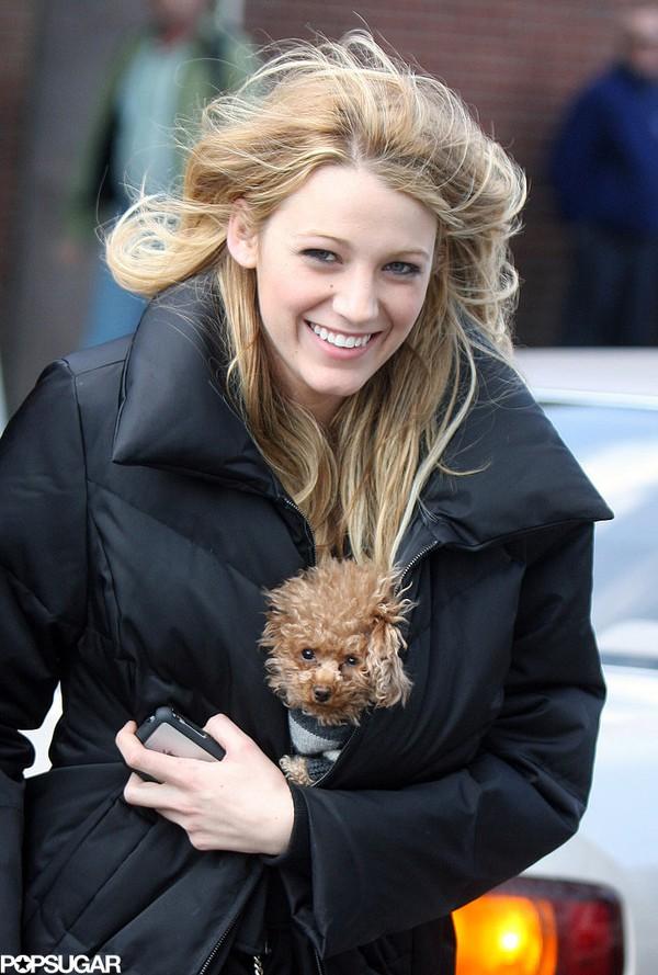 Những thú cưng dễ thương của sao Hollywood 13
