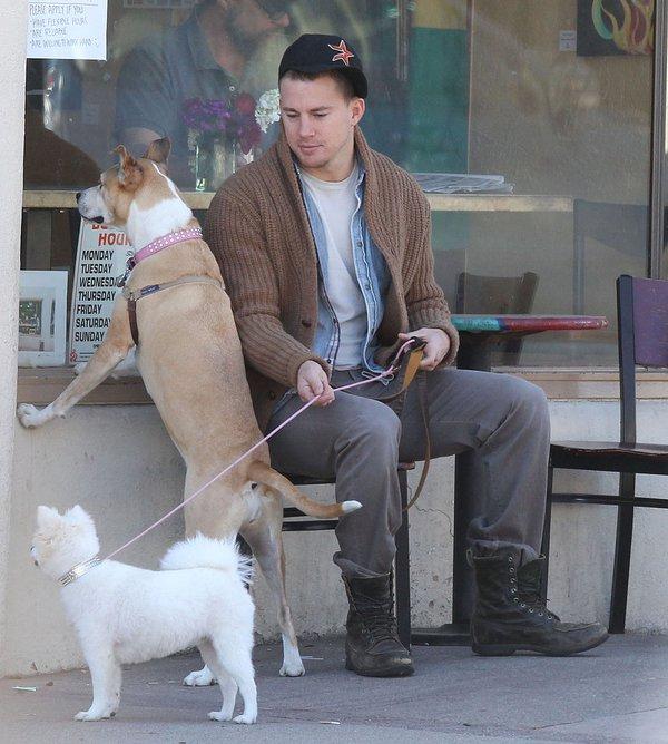 Những thú cưng dễ thương của sao Hollywood 17