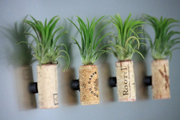 15 tuyệt chiêu trồng cây thông minh cho không gian chật hẹp 11