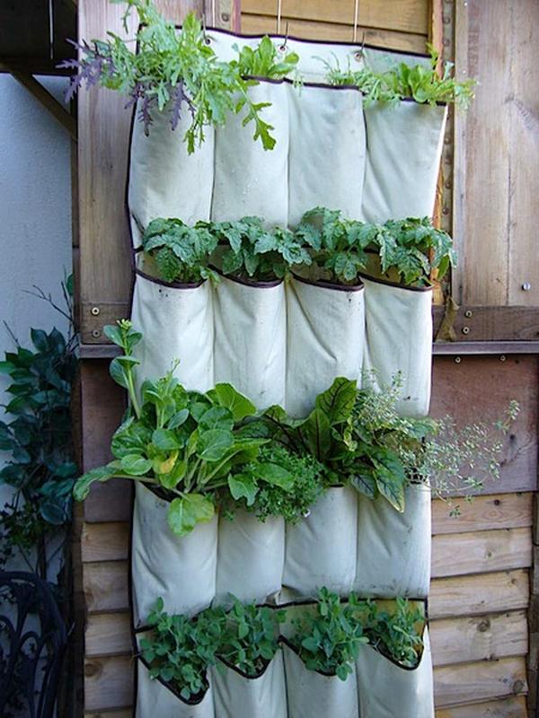 15 tuyệt chiêu trồng cây thông minh cho không gian chật hẹp 3