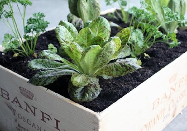 15 tuyệt chiêu trồng cây thông minh cho không gian chật hẹp 5