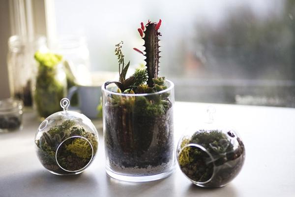 15 tuyệt chiêu trồng cây thông minh cho không gian chật hẹp 8