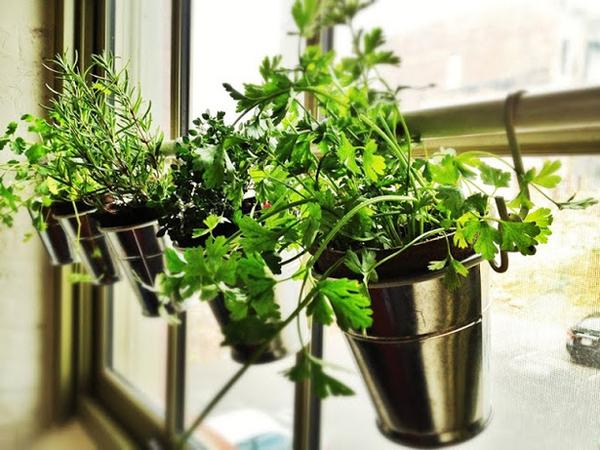 15 tuyệt chiêu trồng cây thông minh cho không gian chật hẹp 10