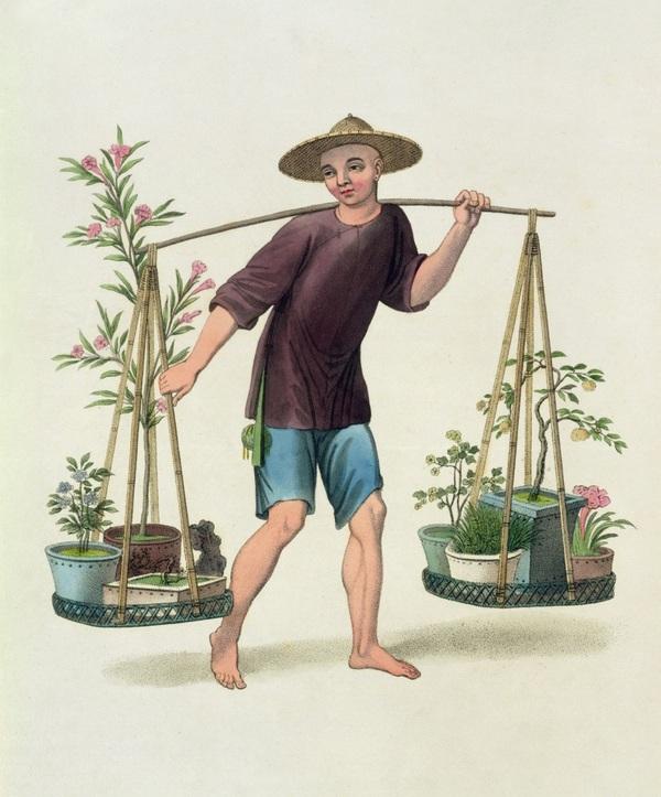 Bonsai – Xuất xứ Trung Quốc, thương hiệu Nhật Bản, tiêu thụ tại Mỹ 3