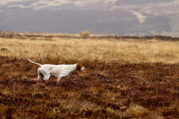 Những bức ảnh chó cưng đẹp nhất 2013 5
