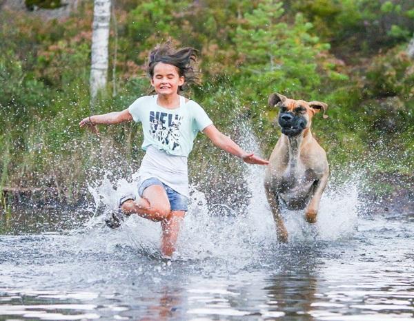 Những bức ảnh chó cưng đẹp nhất 2013 1