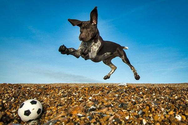 Những bức ảnh chó cưng đẹp nhất 2013 11