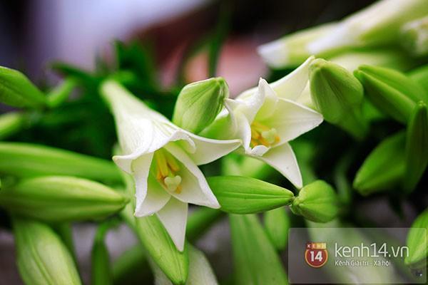 Tháng 4, hoa loa kèn trắng lại rong ruổi khắp phố Hà Nội 3