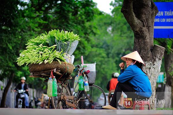 Tháng 4, hoa loa kèn trắng lại rong ruổi khắp phố Hà Nội 8