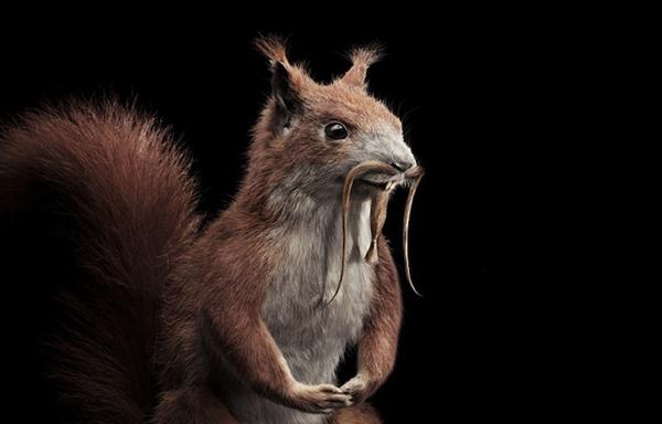 Sáng tạo hài hước biến động vật thành... trò cười 22
