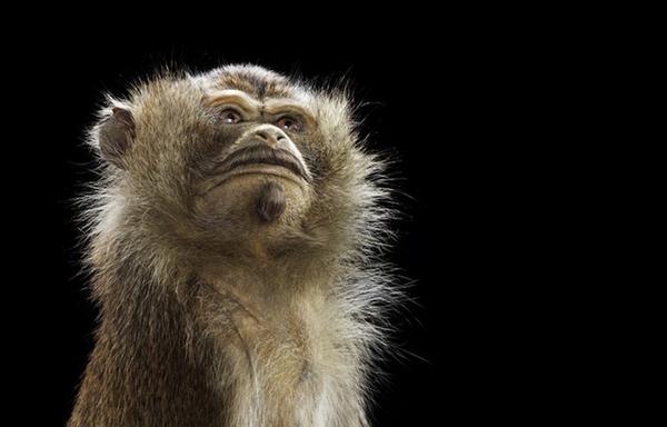 Sáng tạo hài hước biến động vật thành... trò cười 23