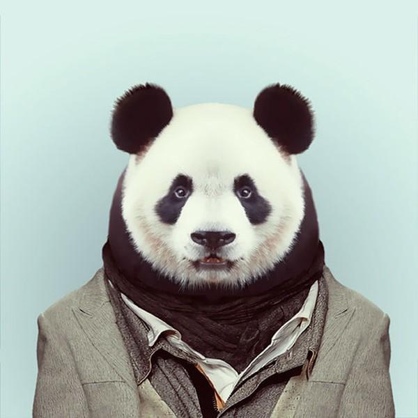 Sáng tạo hài hước biến động vật thành... trò cười 7