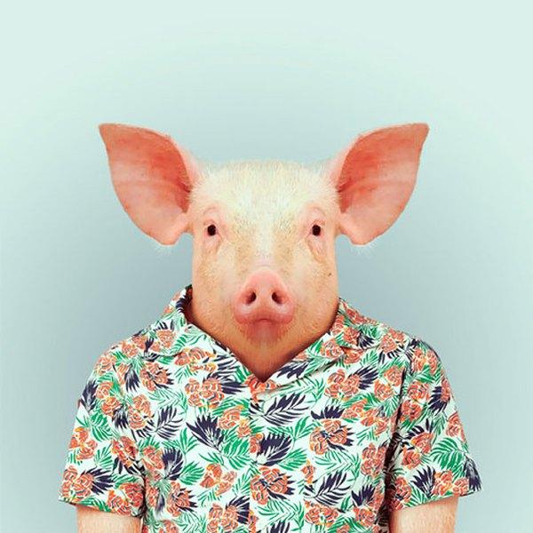 Sáng tạo hài hước biến động vật thành... trò cười 11