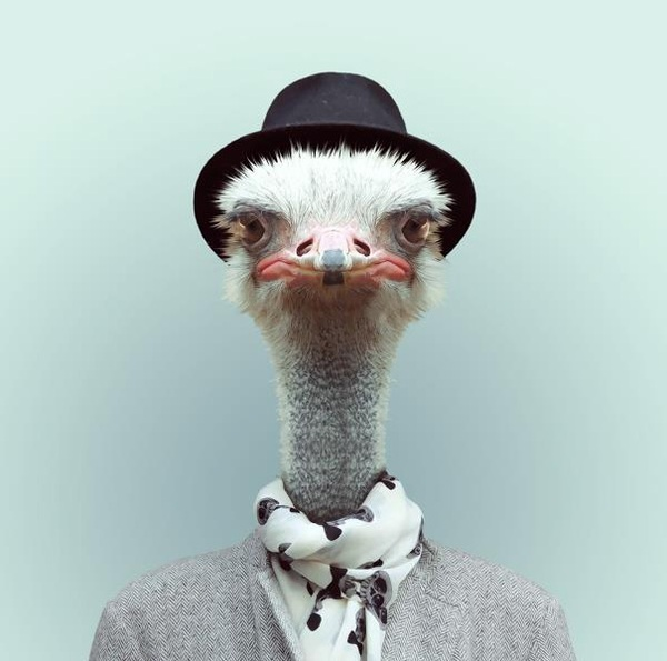 Sáng tạo hài hước biến động vật thành... trò cười 16