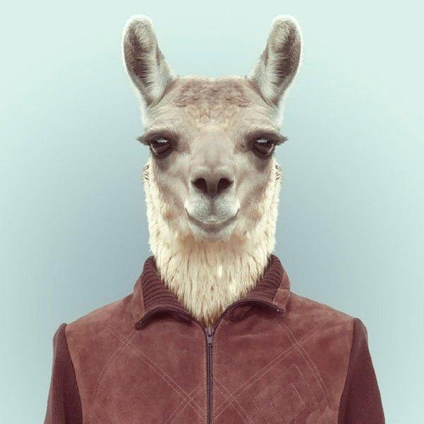 Sáng tạo hài hước biến động vật thành... trò cười 19