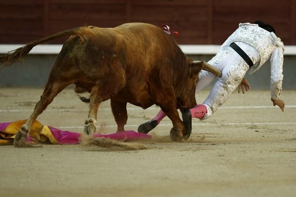 Võ sỹ đấu bò suýt chết vì bị… bò húc 2