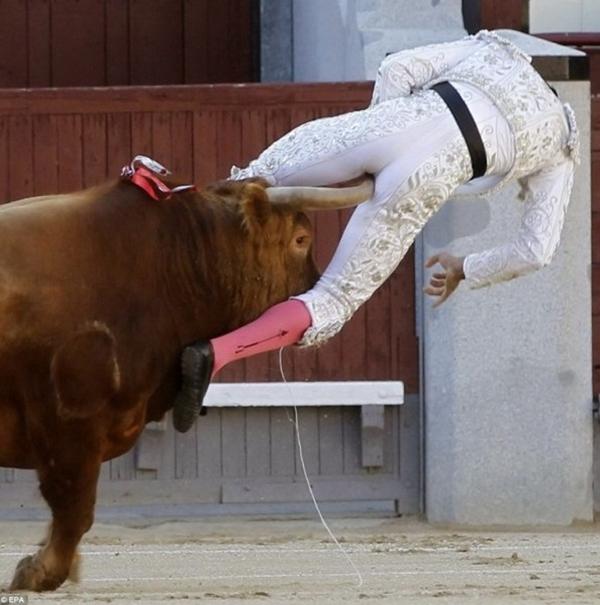 Võ sỹ đấu bò suýt chết vì bị… bò húc 4