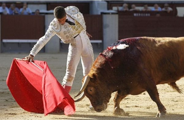 Võ sỹ đấu bò suýt chết vì bị… bò húc 6