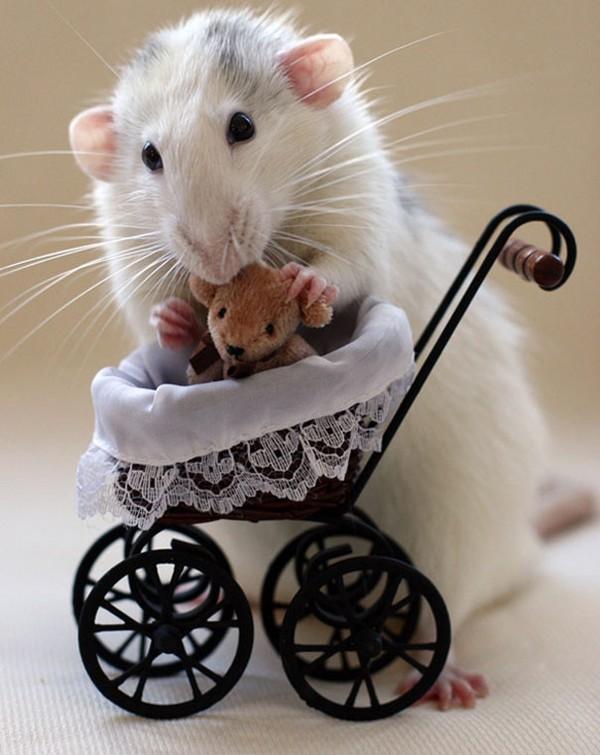 3 chú chuột nhỏ bên gấu bông làm tan chảy trái tim của những người yêu động vật 14