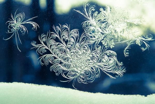 Ấn tượng với những bông hoa tuyết và cây xanh giữa mùa băng giá 11