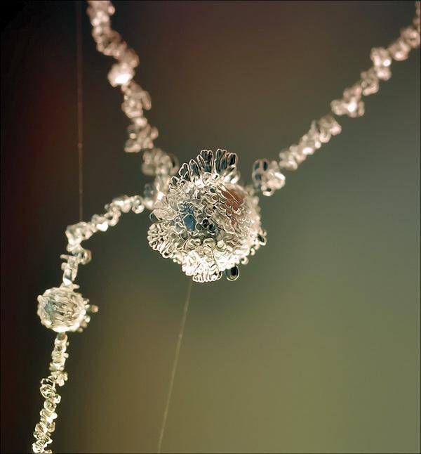 Ấn tượng với những bông hoa tuyết và cây xanh giữa mùa băng giá 2
