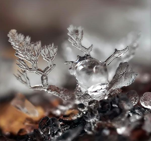 Ấn tượng với những bông hoa tuyết và cây xanh giữa mùa băng giá 5