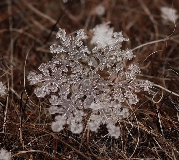 Ấn tượng với những bông hoa tuyết và cây xanh giữa mùa băng giá 7