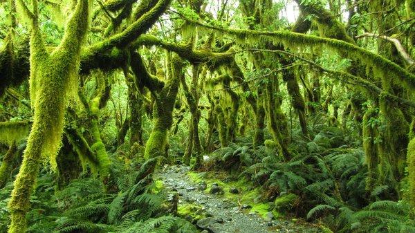 Ngỡ ngàng với phong cảnh tuyệt đẹp tại đảo Nam New Zealand 5