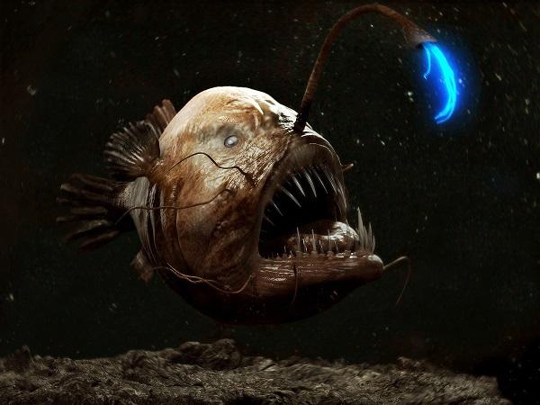 """Điểm tên các loài cá quái vật """"hiếm có khó tìm"""" trên Trái Đất 3"""