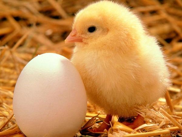 """Quy trình chế biến gạo, thịt, trứng """"rởm"""" gây hoang mang 5"""