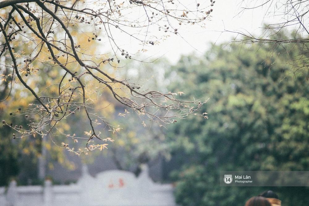 Hà Nội dịu dàng và xinh đẹp hơn trong sắc vàng của mùa cây thay lá - Ảnh 6.