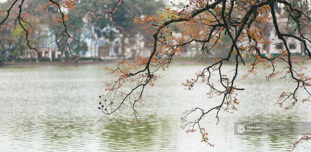 Hà Nội dịu dàng và xinh đẹp hơn trong sắc vàng của mùa cây thay lá - Ảnh 1.
