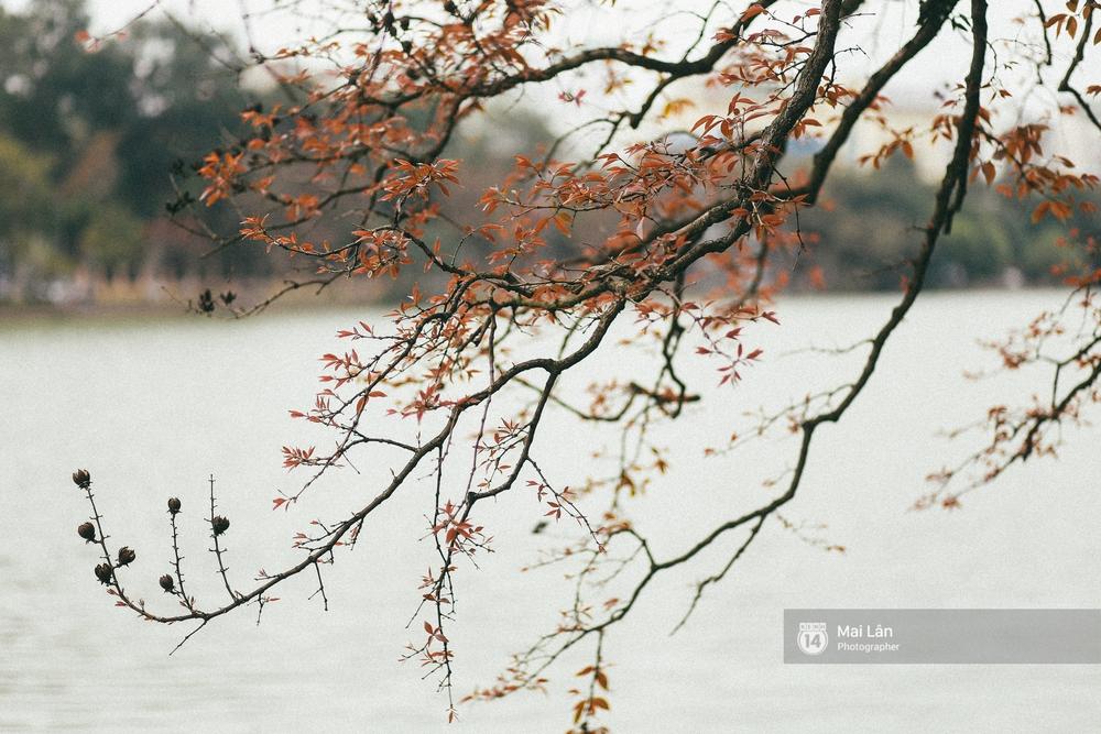 Hà Nội dịu dàng và xinh đẹp hơn trong sắc vàng của mùa cây thay lá - Ảnh 14.
